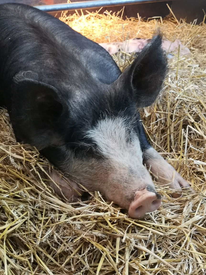 24th May: Piglets and Pals